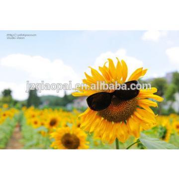 1000-1200kg/h Sunflower Seed Hulling machine