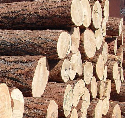 Before making furniture, why we have to dry and insecticidal wood material?